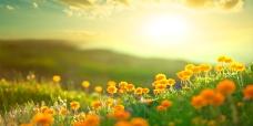 flores-paz