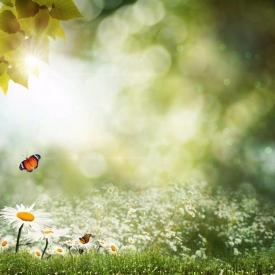 crian-as-primavera-fotos-fundos-flores-brancas